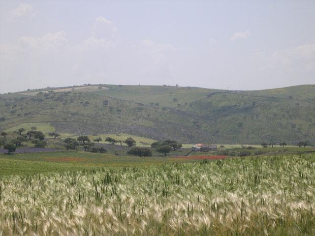Paisaje Valverde de Burguillos