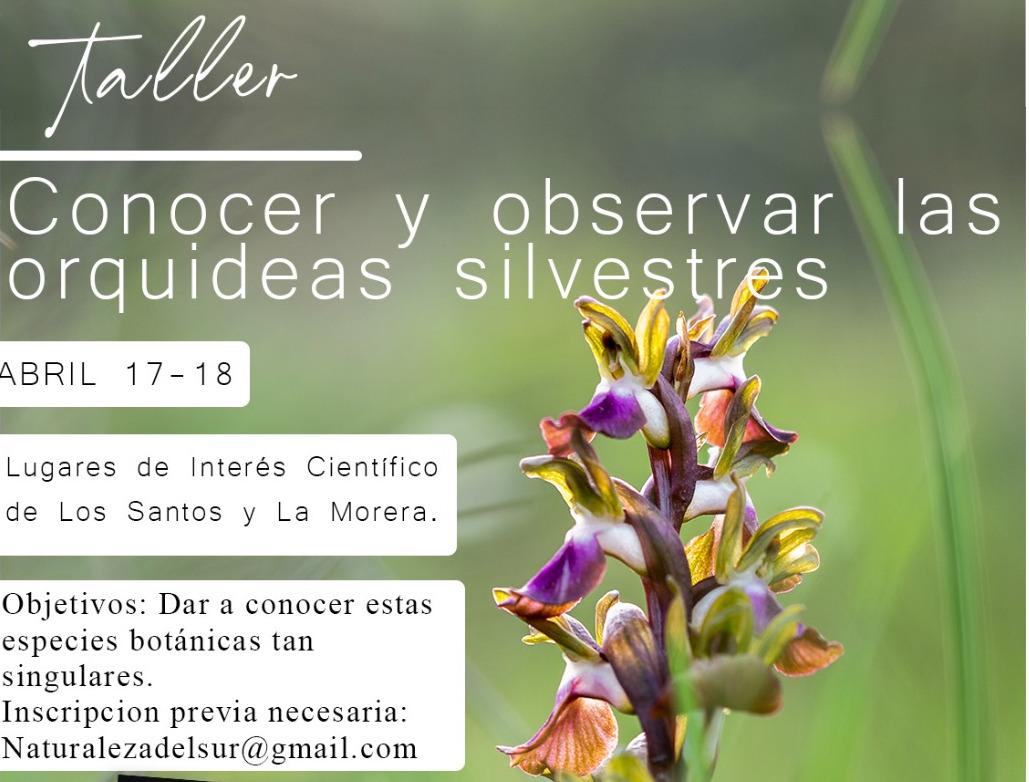Ruta para conocer y observar las orquídeas silvestres.